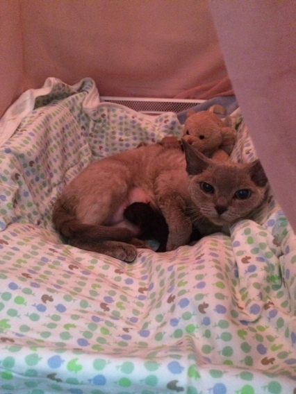 Adele med kattungar 2